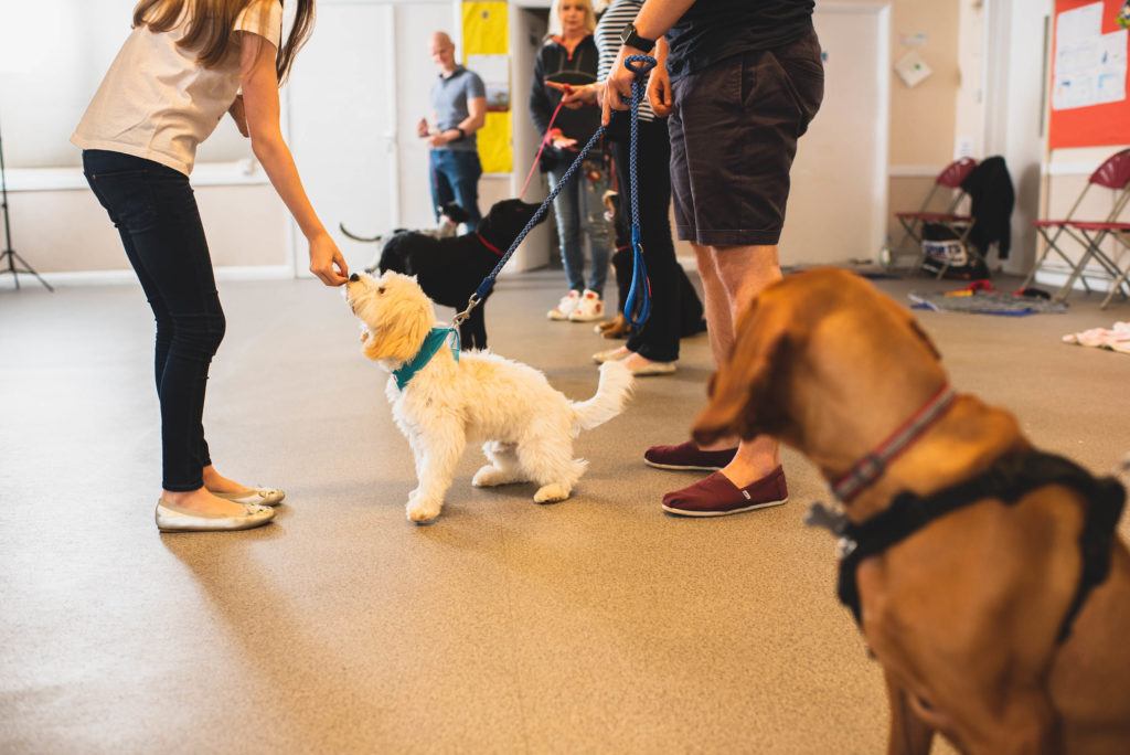 Lady giving treat to puppy at puppy training classes